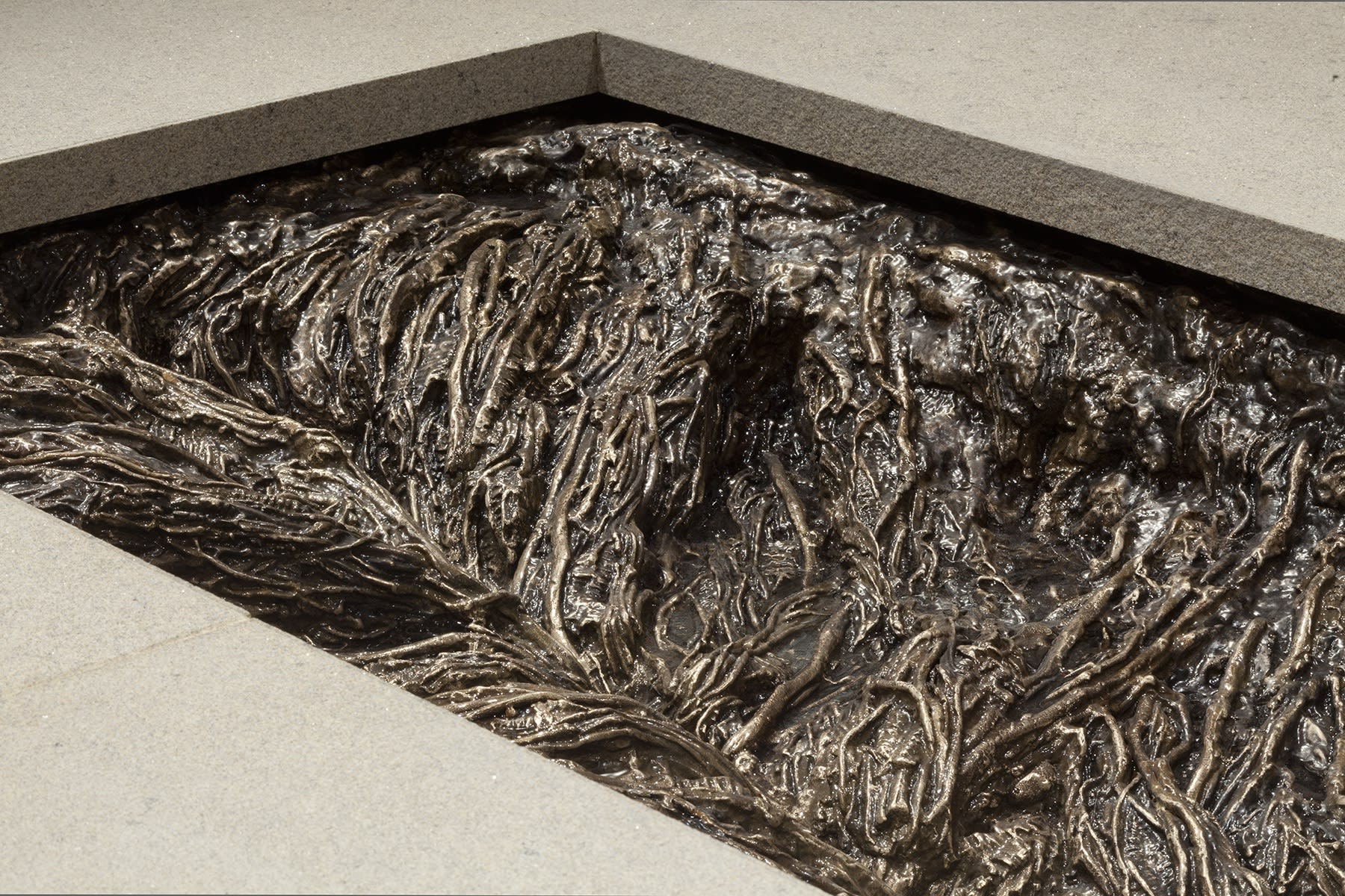 A rectangular cut away reveals a system of cast roots close up.