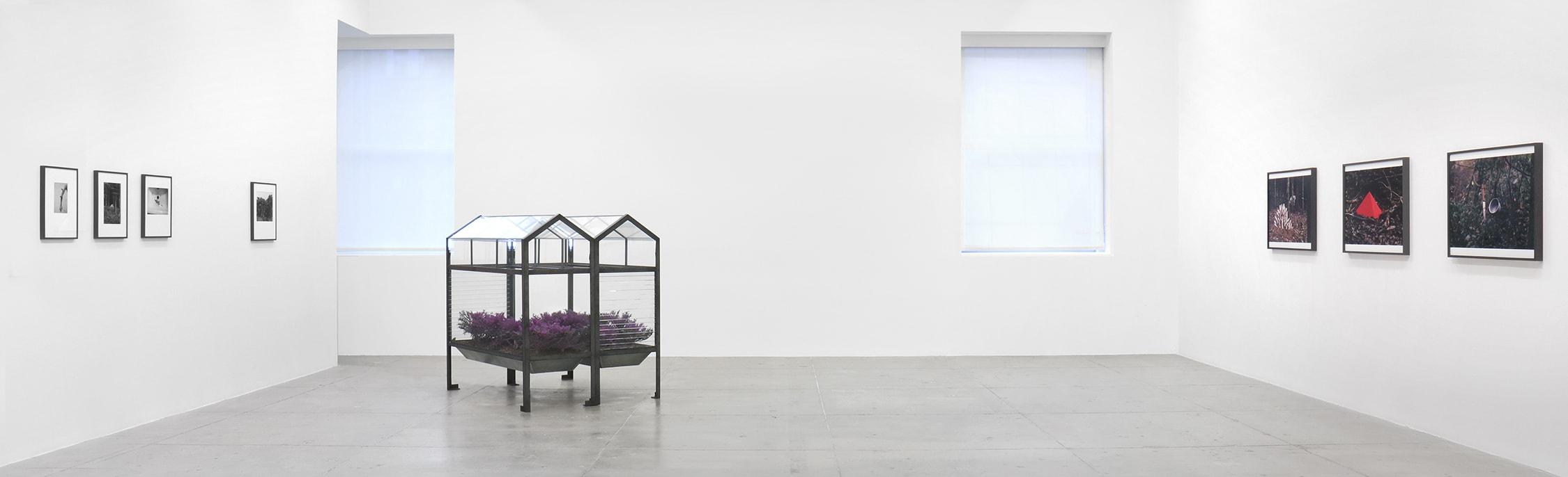 a series of photographs by  Lothar Baumgarten at Marian Goodman Gallery New York