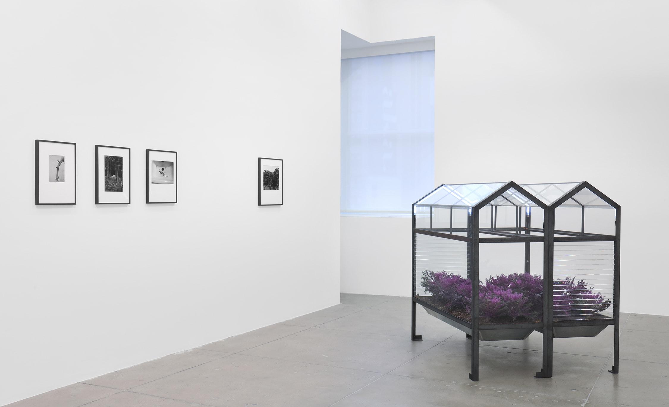 installation view of works by Lothar Baumgarten