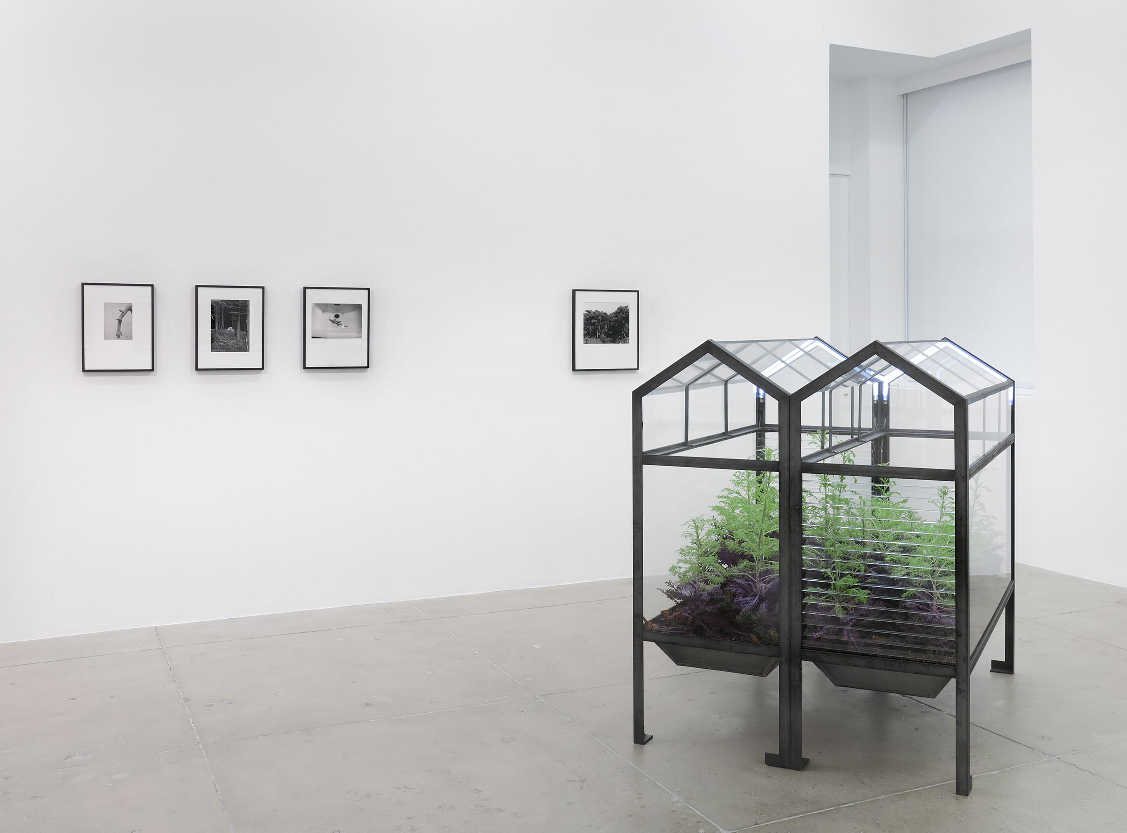 photographs by Lothar Baumgarten on the wall, with a glass habitat for butteflies