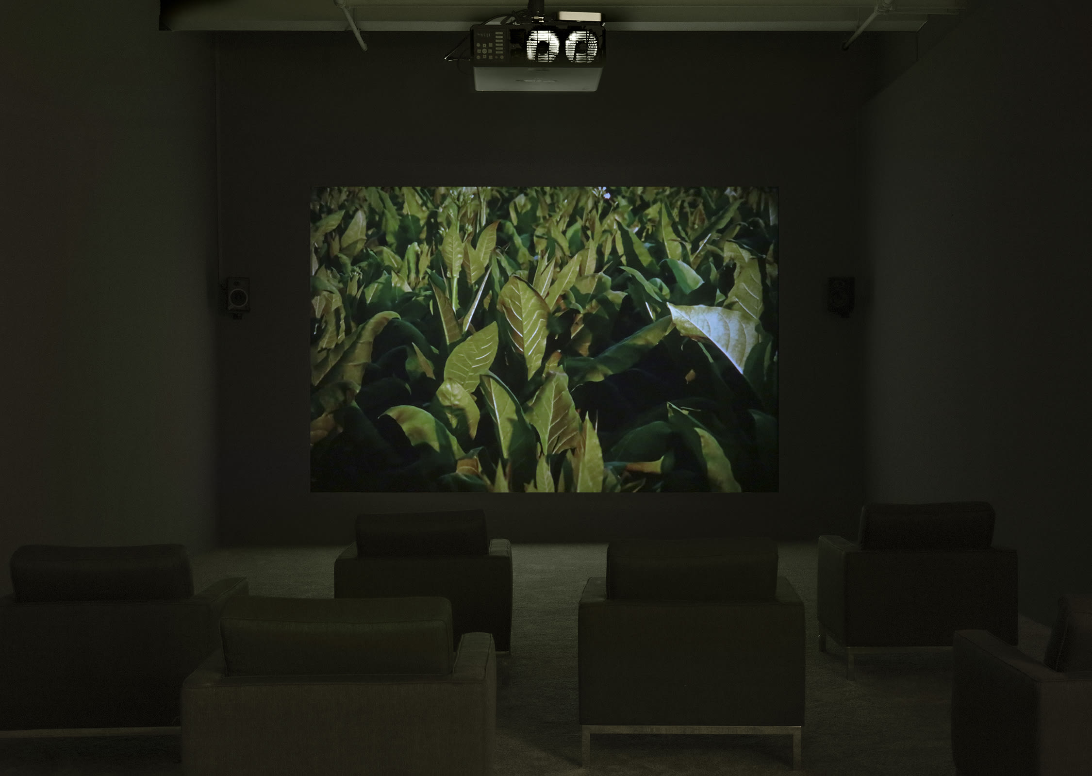 Installation view of Lothar Baumgarten's film. Shot contains a close-up of green plant leaves.