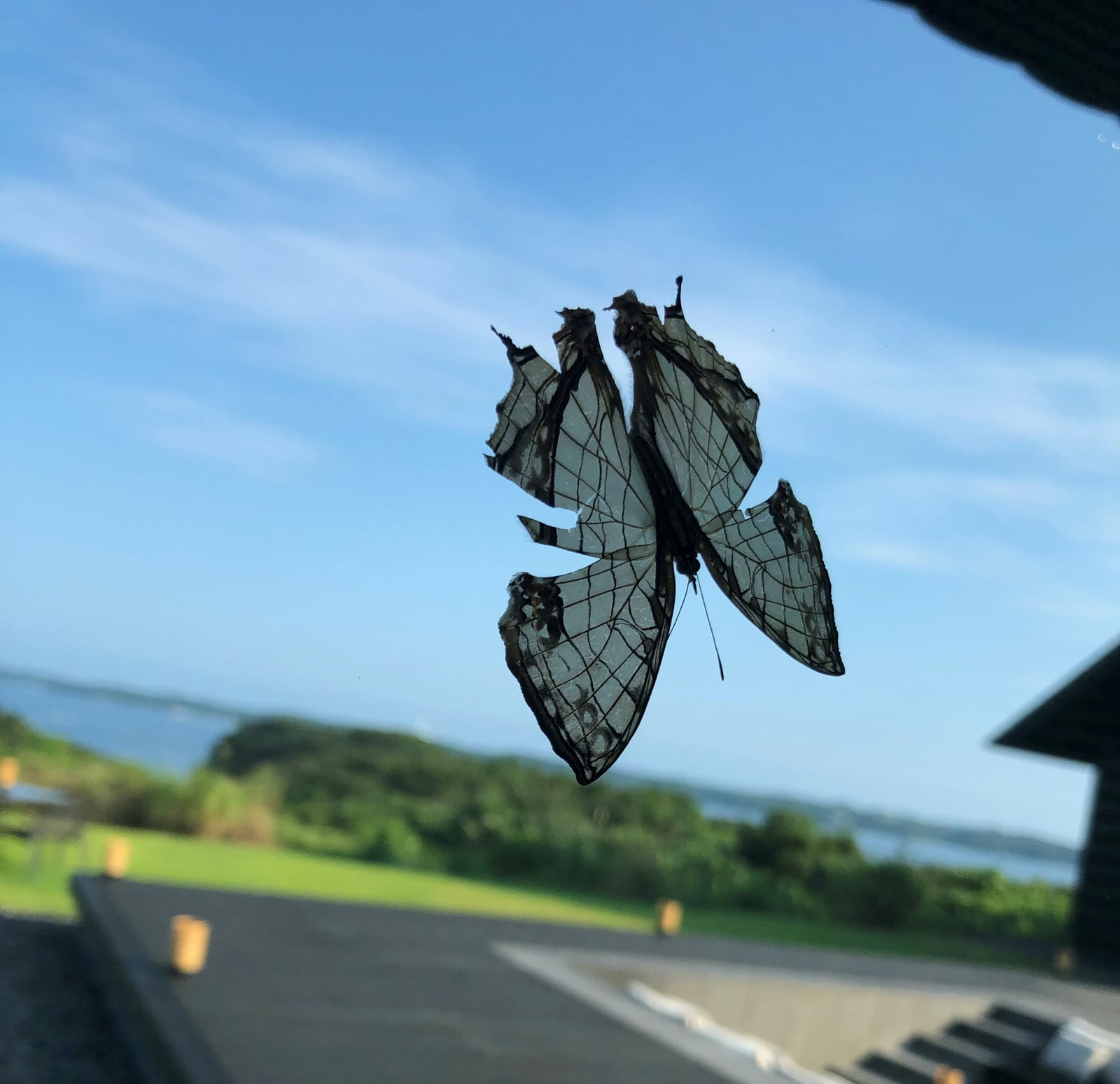 Photograph of a butterfly on a dashboard by Gabriel Orozco