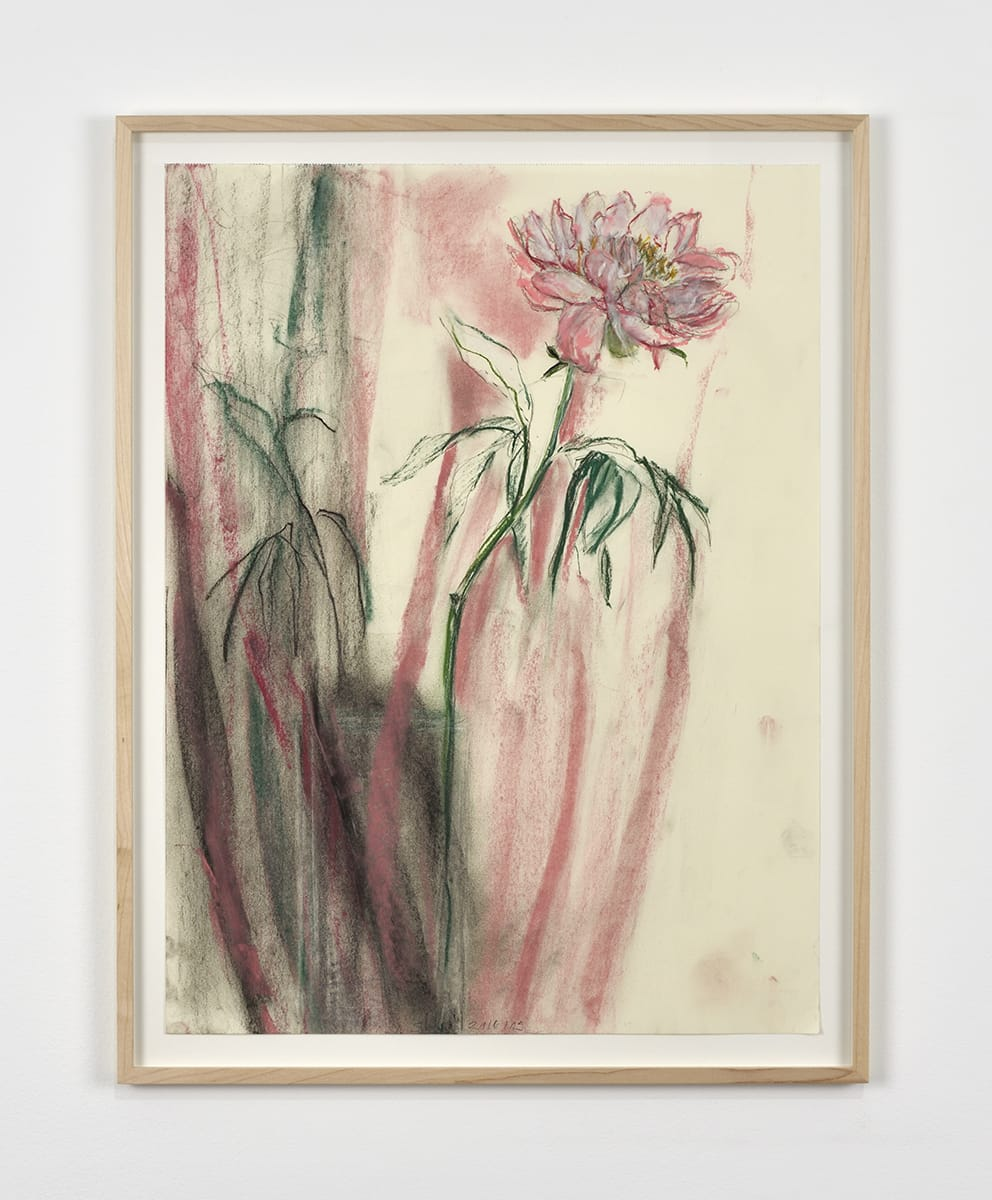 Sabine Moritz, Peony with pink stripes I, 2019