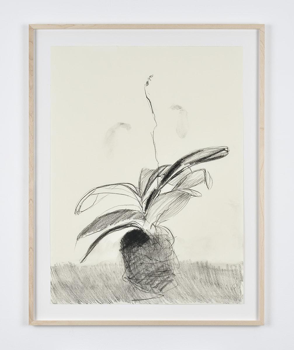 Sabine Moritz, Budding Orchid II, 2019