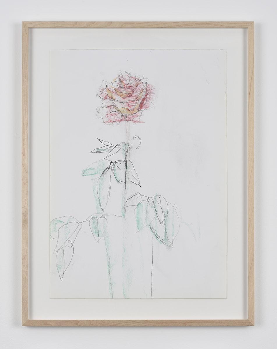Sabine Moritz, Rose 46, 2019