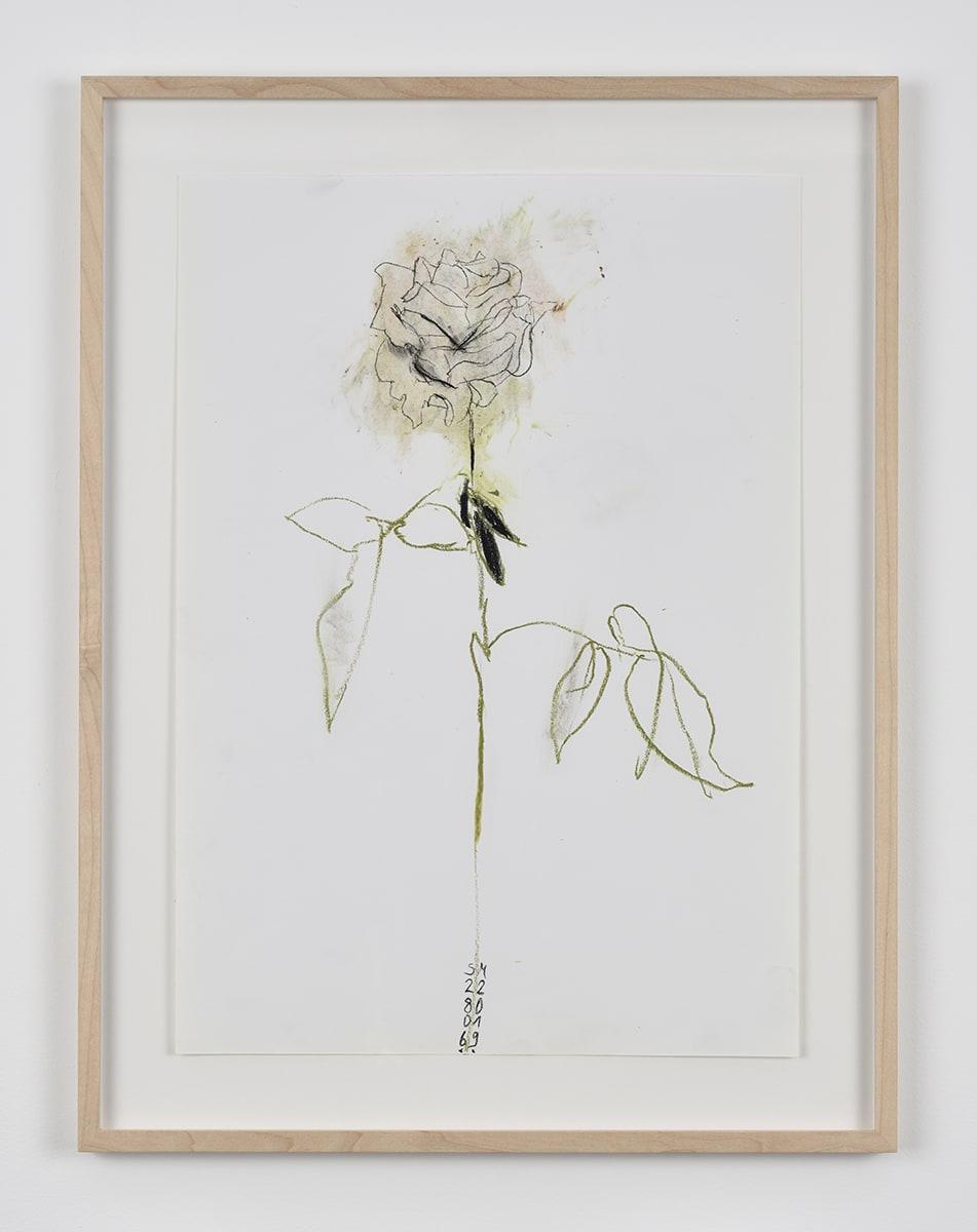Sabine Moritz, Rose 45, 2019