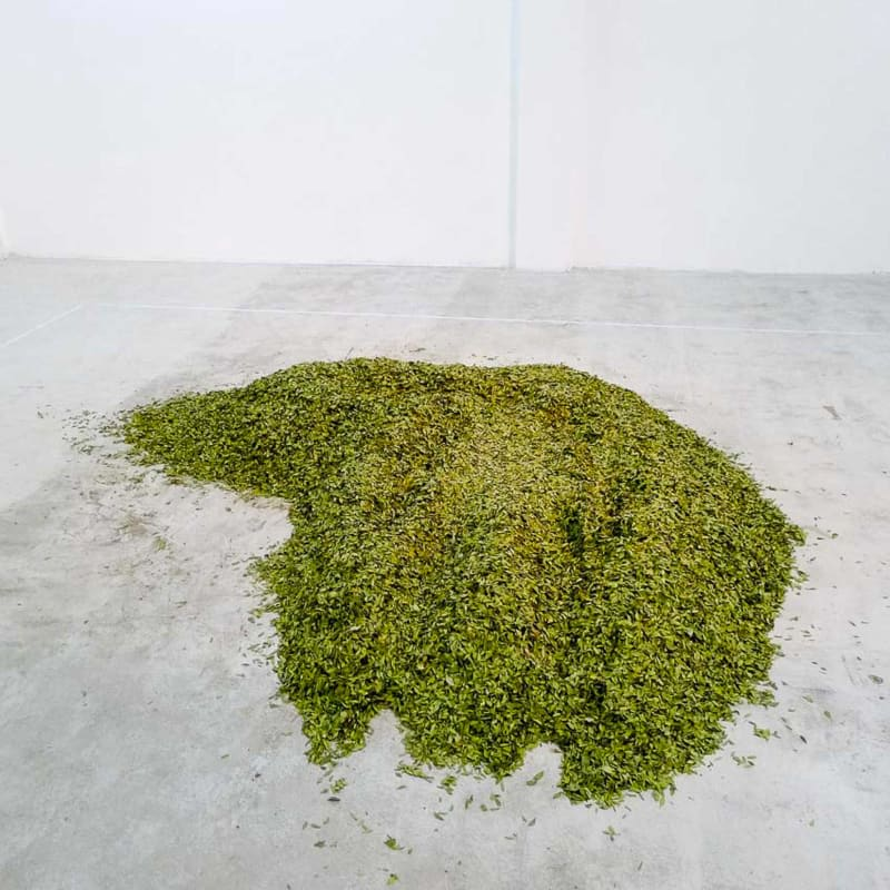 Hedge clippings piled on gallery floor.