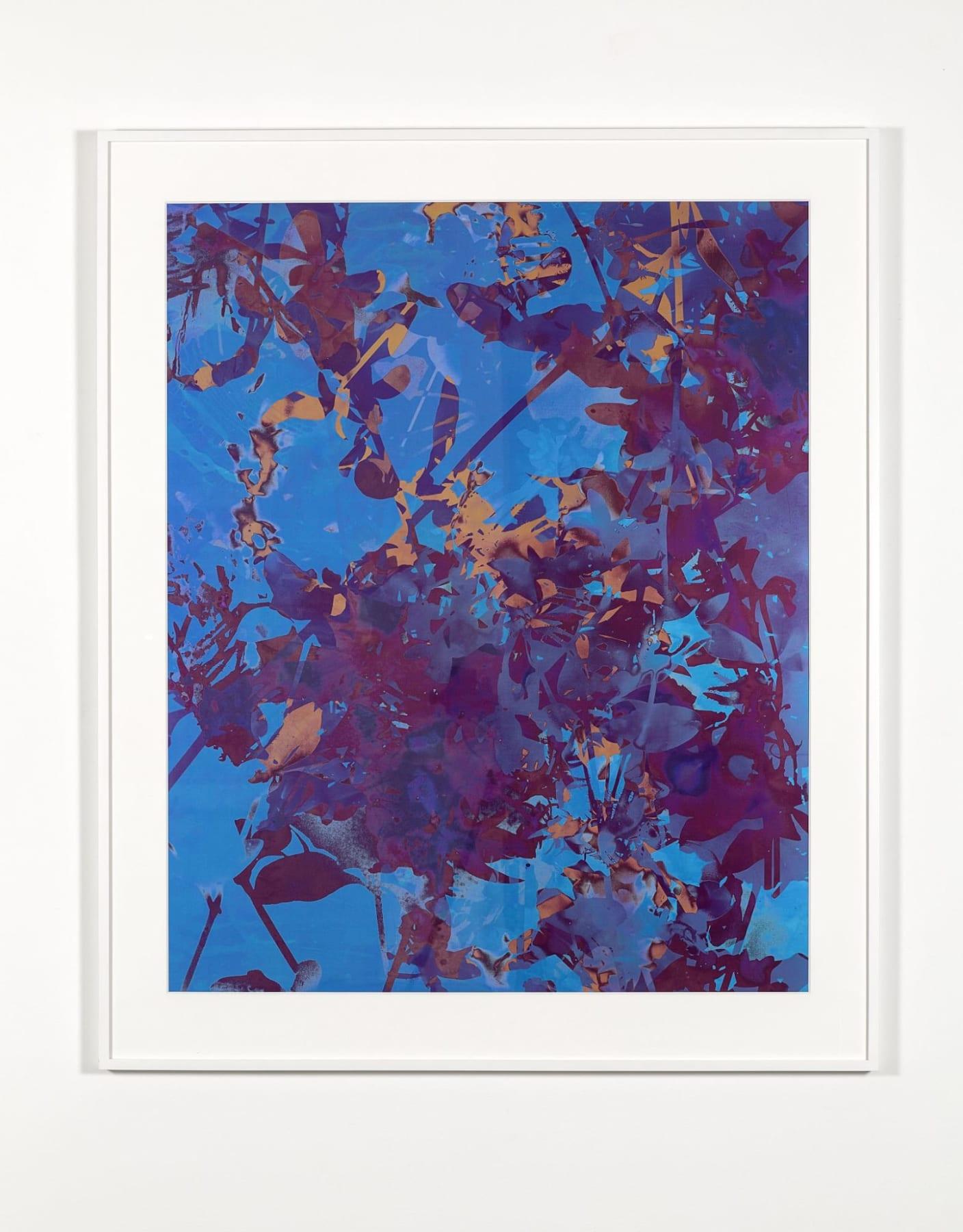 A blue, purple and orange photo collage of overlaid views of foliage.