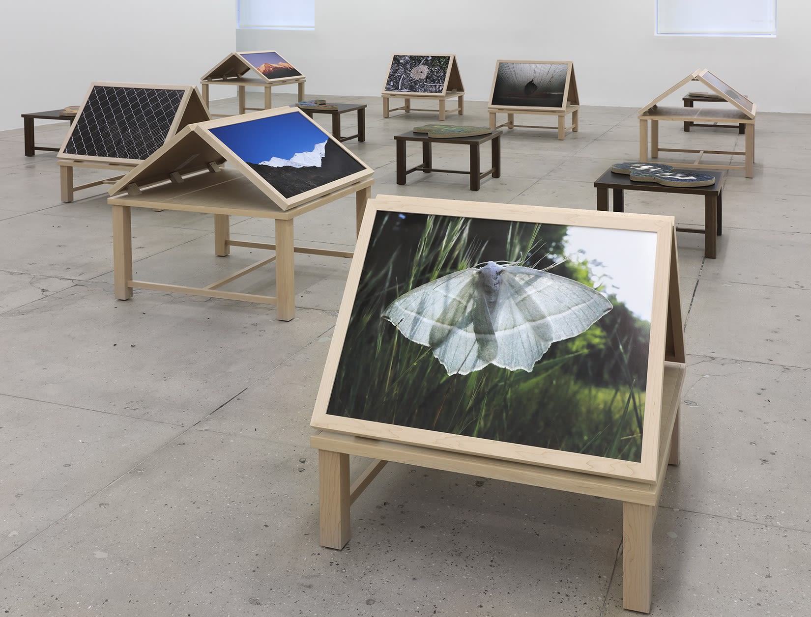 12 wooden platforms display color nature photographs and flat sculptures. In the foreground is a photograph of a white moth in grass.