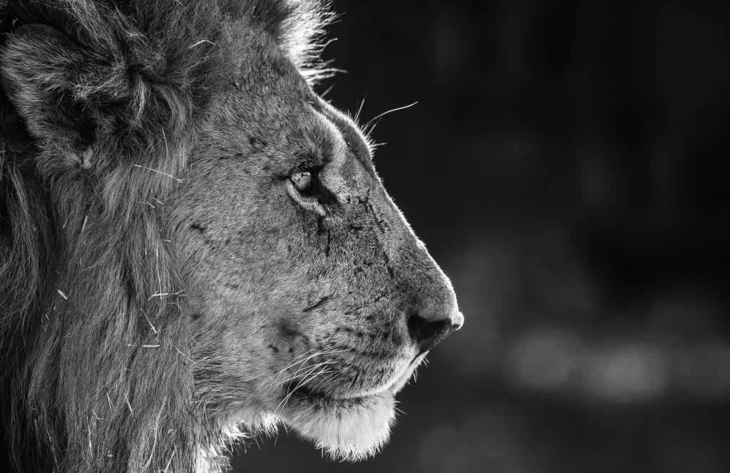 3 Reasons Why Investors Love David Yarrow , For more than two decades, acclaimed British photographer David Yarrow has immersed...