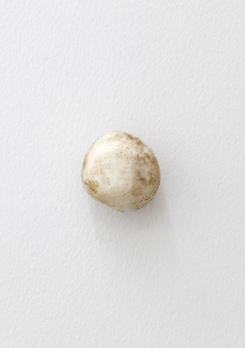 "<span class=""link fancybox-details-link""><a href=""/exhibitions/152/works/artworks12740/"">View Detail Page</a></span><div class=""artist""><strong>KARIN SANDER</strong></div><div class=""title""><em>White Champignon (Kitchen Pieces)</em>, 2012</div><div class=""medium"">white champignon, stainless steel</div><div class=""dimensions"">dimension variable</div>"