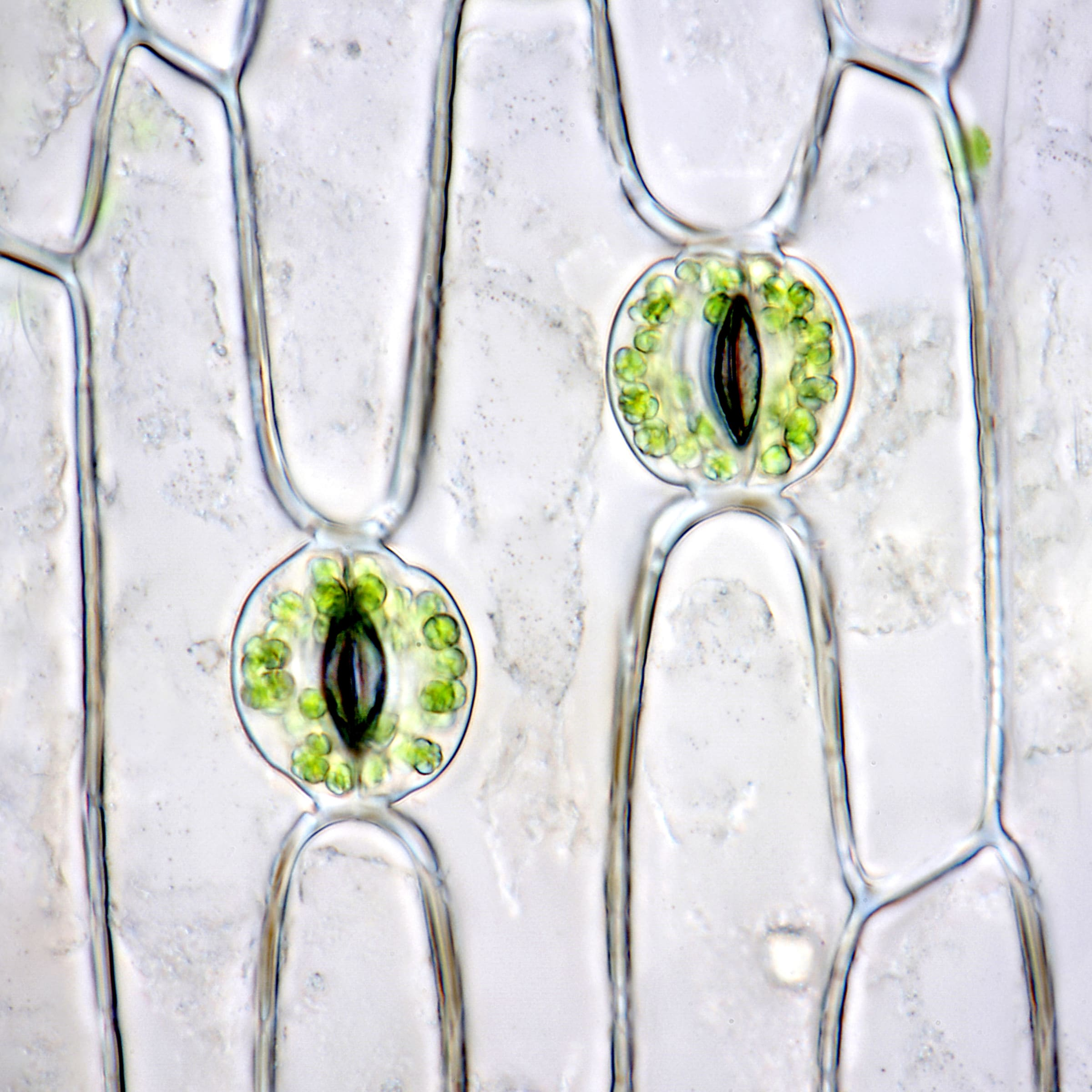 """<span class=""""link fancybox-details-link""""><a href=""""/exhibitions/92/works/artworks8216/"""">View Detail Page</a></span><div class=""""medium"""">glass spheres, optically clear epoxy resin, aqueous isolation, cast vinyl film, lacquer on contoured and shaped panel</div> <div class=""""dimensions"""">900mm x 900mm x 50mm</div>"""