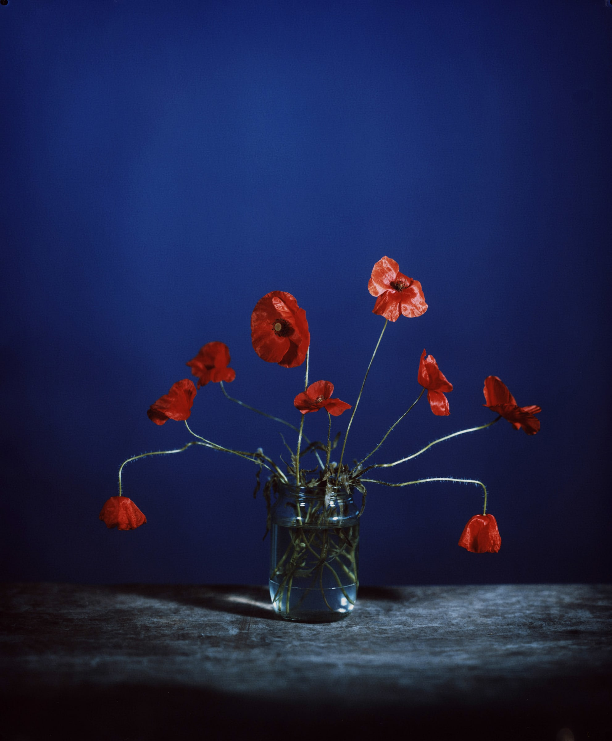 """<span class=""""link fancybox-details-link""""><a href=""""/exhibitions/29/works/artworks922/"""">View Detail Page</a></span><div class=""""artist""""><strong>Brendan Barry</strong></div><div class=""""title""""><em>Common Poppy</em>, 2020</div><div class=""""medium"""">Unique Chromogenic photograph made using a Camera Obscura<br>Framed in a handmade bright-red sprayed box frame in museum glass</div><div class=""""dimensions"""">61 x 50.8 cm<br>24 x 20 in</div>"""