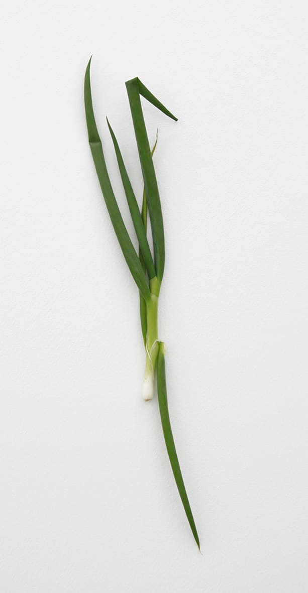 "<span class=""link fancybox-details-link""><a href=""/exhibitions/152/works/artworks12738/"">View Detail Page</a></span><div class=""artist""><strong>KARIN SANDER</strong></div><div class=""title""><em>Spring onion (Kitchen Pieces)</em>, 2012</div><div class=""medium"">spring onion, stainless steel nail</div>"