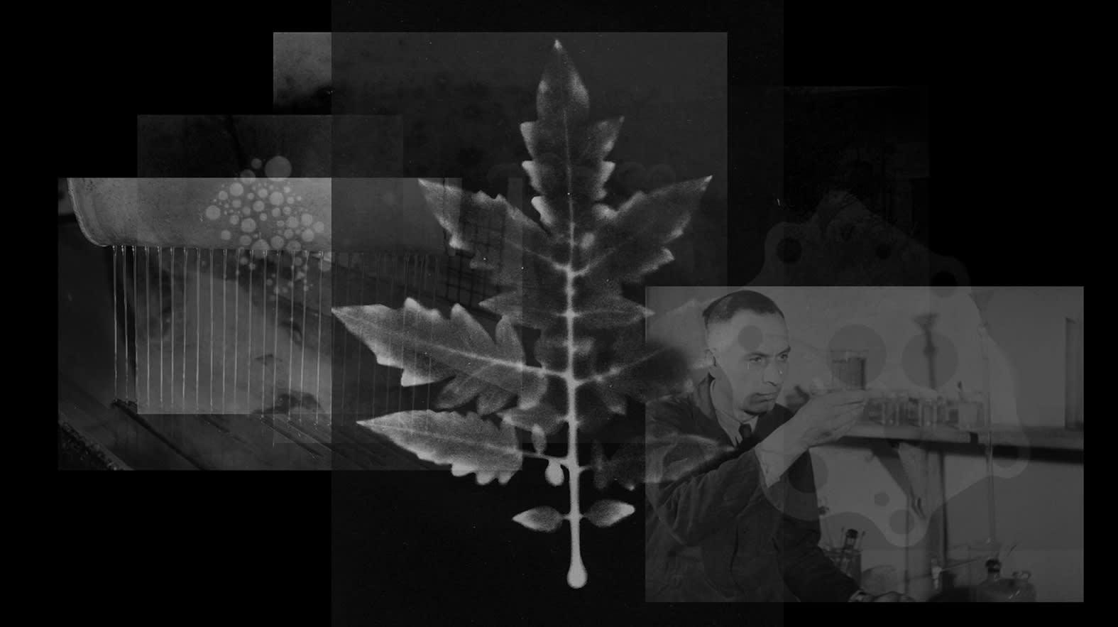 "<span class=""link fancybox-details-link""><a href=""/exhibitions/144/works/artworks11168/"">View Detail Page</a></span><div class=""artist""><strong> Alexandra Navratil</strong></div><div class=""title""><em>Resurrections</em>, 2014</div><div class=""medium"">black and white HD video with sound</div><div class=""dimensions"">00:06:37 min</div><div class=""edition_details""></div>"