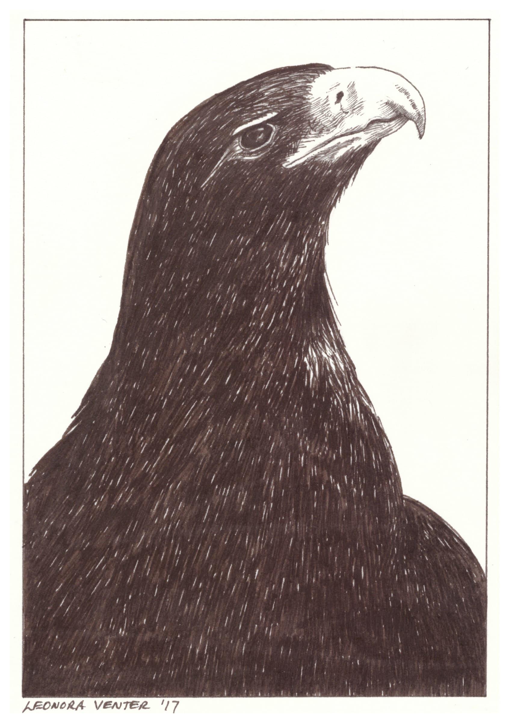 <span class=&#34;link fancybox-details-link&#34;><a href=&#34;/artists/71-leonora-venter/works/2261-leonora-venter-eagle-2017/&#34;>View Detail Page</a></span><div class=&#34;artist&#34;><strong>Leonora Venter</strong></div> <div class=&#34;title&#34;><em>Eagle</em>, 2017</div> <div class=&#34;medium&#34;>Ink On Paper</div> <div class=&#34;dimensions&#34;>14.5cm x 10.5cm</div><div class=&#34;price&#34;>R600.00</div>