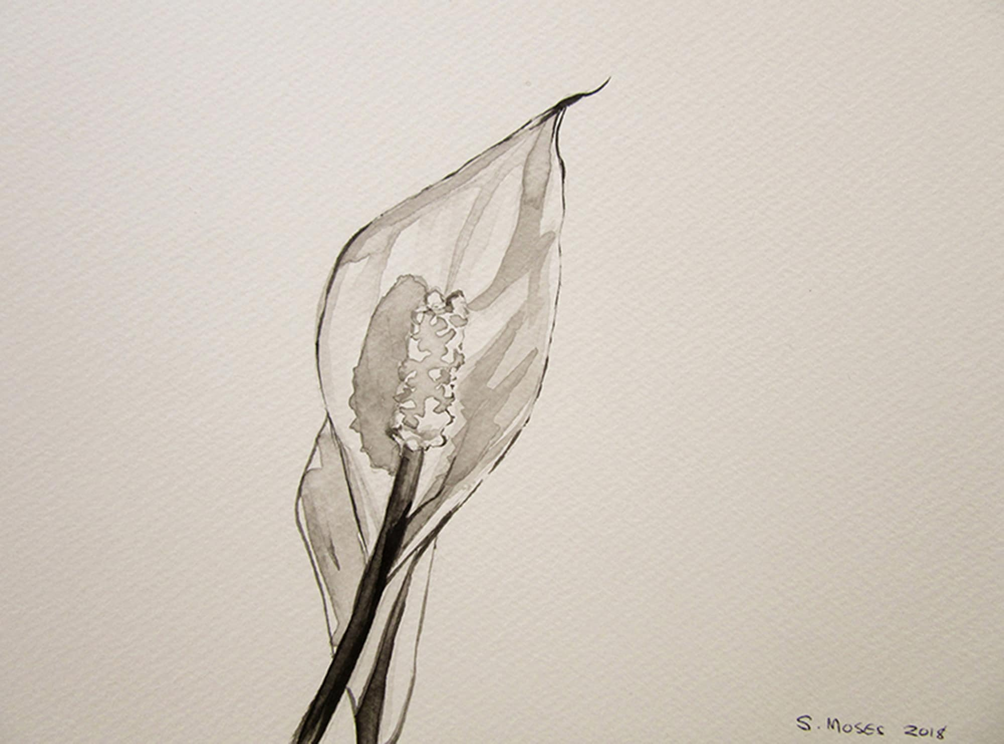 <span class=&#34;link fancybox-details-link&#34;><a href=&#34;/artists/49-sharon-moses/works/2502-sharon-moses-peace-lily-2018/&#34;>View Detail Page</a></span><div class=&#34;artist&#34;><strong>Sharon Moses</strong></div> <div class=&#34;title&#34;><em>Peace Lily</em>, 2018</div> <div class=&#34;medium&#34;>Ink On 300Gsm Cold Pressed Acid-Free Paper</div> <div class=&#34;dimensions&#34;>14.8cm x 21cm</div><div class=&#34;price&#34;>R500.00</div>