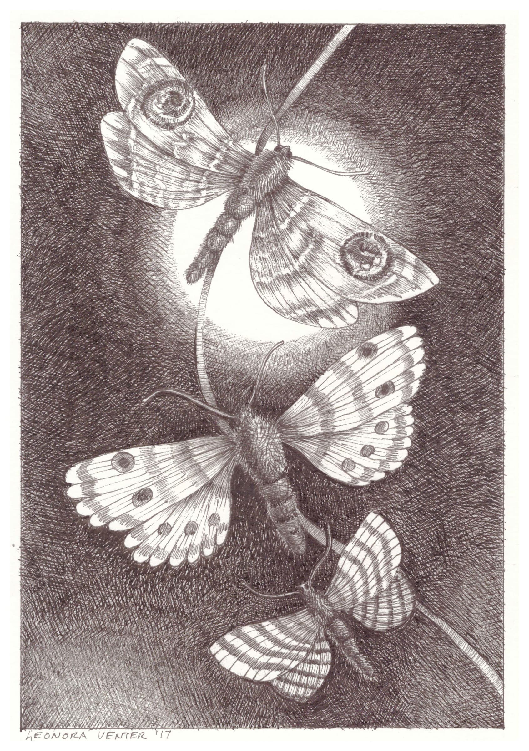 <span class=&#34;link fancybox-details-link&#34;><a href=&#34;/artists/71-leonora-venter/works/2266-leonora-venter-moths-2017/&#34;>View Detail Page</a></span><div class=&#34;artist&#34;><strong>Leonora Venter</strong></div> <div class=&#34;title&#34;><em>Moths</em>, 2017</div> <div class=&#34;medium&#34;>Ink On Paper</div> <div class=&#34;dimensions&#34;>14.5cm x 10.5cm</div><div class=&#34;price&#34;>R600.00</div>