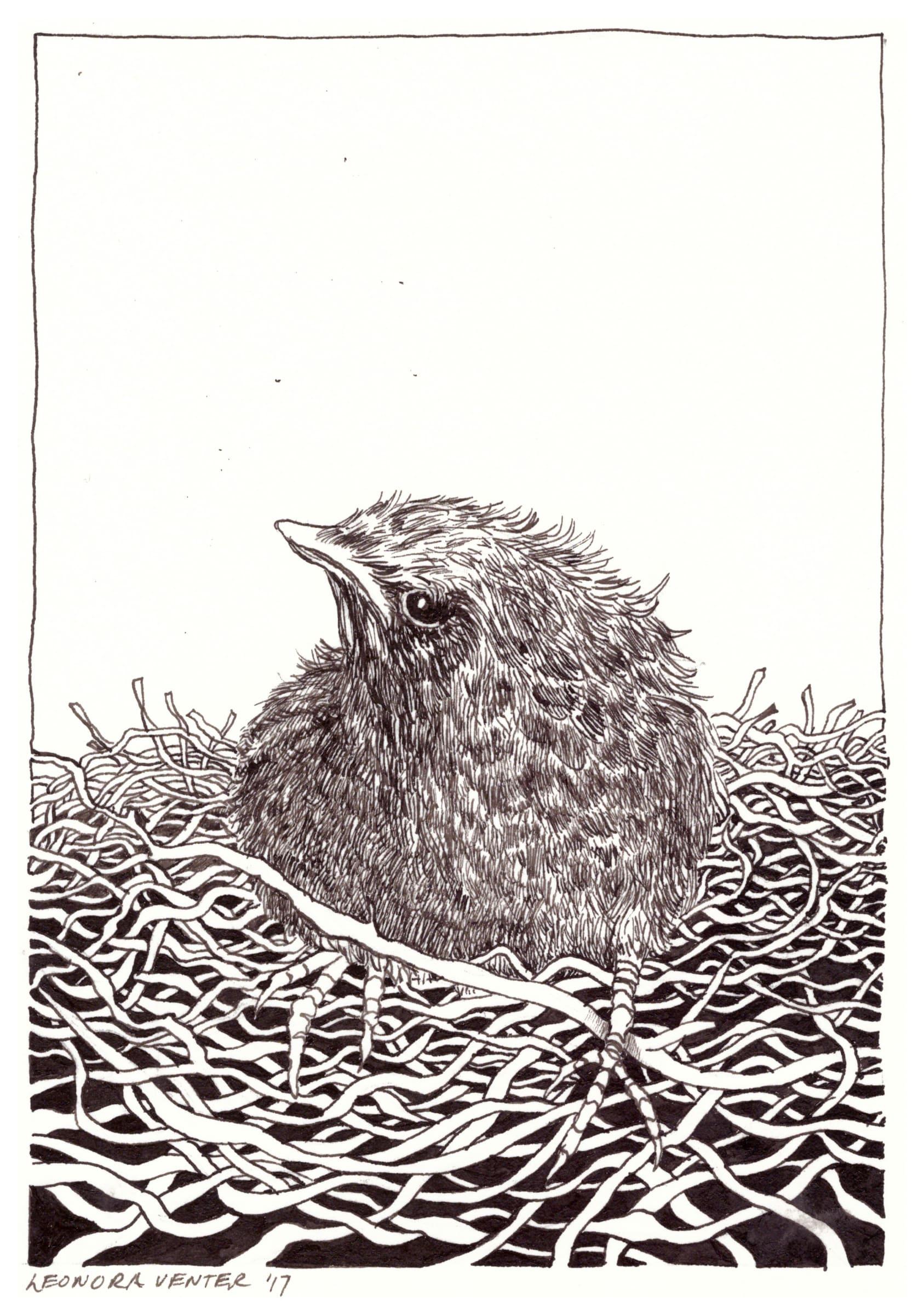<span class=&#34;link fancybox-details-link&#34;><a href=&#34;/artists/71-leonora-venter/works/2257-leonora-venter-bird-and-nest-2017/&#34;>View Detail Page</a></span><div class=&#34;artist&#34;><strong>Leonora Venter</strong></div> <div class=&#34;title&#34;><em>Bird And Nest</em>, 2017</div> <div class=&#34;medium&#34;>Ink On Paper</div> <div class=&#34;dimensions&#34;>14.5cm x 10.5cm</div><div class=&#34;price&#34;>R600.00</div>
