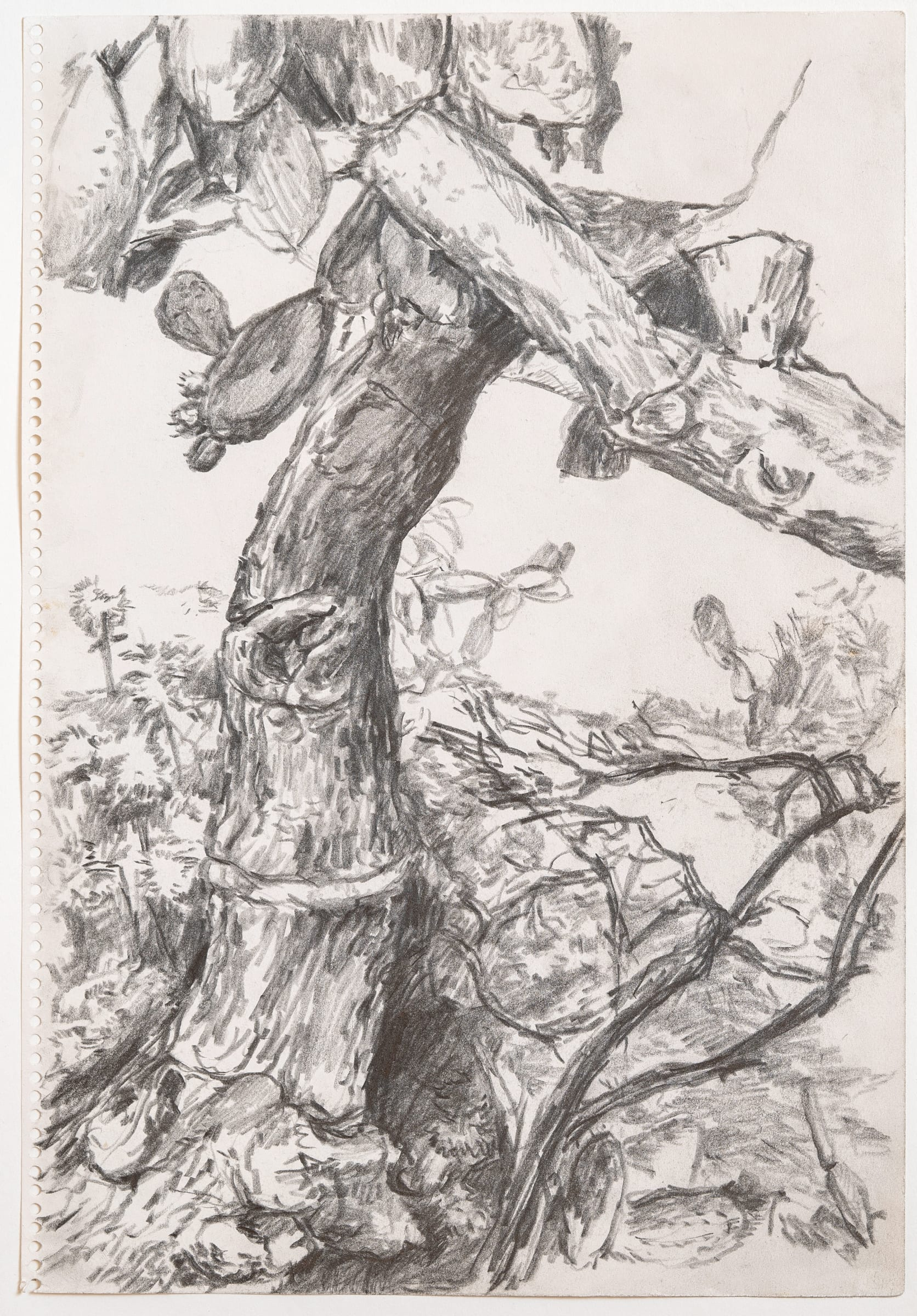 """<span class=""""link fancybox-details-link""""><a href=""""/artists/266-paul-thek/works/11210-paul-thek-untitled-tree-1970/"""">View Detail Page</a></span><div class=""""artist""""><span class=""""artist""""><strong>PAUL THEK</strong></span></div><div class=""""title""""><em>Untitled (Tree)</em>, 1970</div><div class=""""medium"""">Pencil on paper</div><div class=""""dimensions"""">34 x 23.5 cm<br /> 13 3/8 x 9 1/4 inches</div>"""