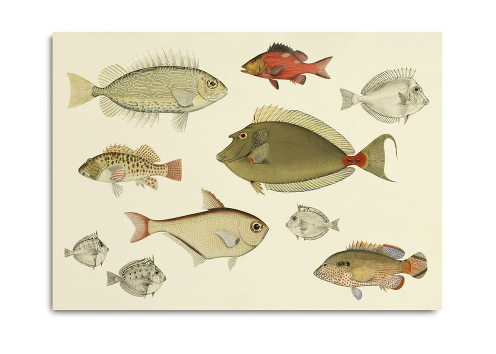 "<span class=""link fancybox-details-link""><a href=""/artists/203-framed-prints/works/871-framed-prints-fishes-3902h/"">View Detail Page</a></span><div class=""artist""><strong>Framed Prints</strong></div> <div class=""title""><em>Fishes 3902H</em></div> <div class=""dimensions"">40 x 30 cm</div> <div class=""edition_details""></div><div class=""price"">£40.00</div><div class=""copyright_line"">Copyright The Artist</div>"