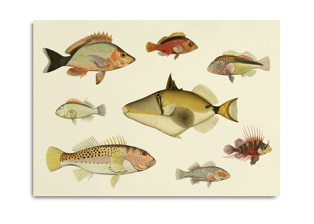 "<span class=""link fancybox-details-link""><a href=""/artists/203-framed-prints/works/872-framed-prints-fishes-3903h-2017/"">View Detail Page</a></span><div class=""artist""><strong>Framed Prints</strong></div> <div class=""title""><em>Fishes 3903H</em>, 2017</div> <div class=""dimensions"">40 x 30 cm</div> <div class=""edition_details""></div><div class=""price"">£40.00</div><div class=""copyright_line"">Copyright The Artist</div>"
