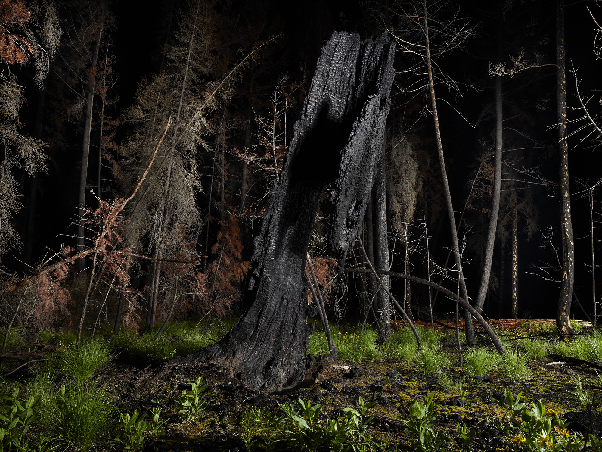 """<span class=""""link fancybox-details-link""""><a href=""""/artists/45-rita-leistner/works/35116-rita-leistner-the-tree-plantersenchanted-forest-11-2019/"""">View Detail Page</a></span><div class=""""artist""""><strong>Rita Leistner</strong></div> b. 1964 <div class=""""title""""><em>The Tree Planters–Enchanted Forest #11</em>, 2019</div> <div class=""""signed_and_dated"""">Signed, titled, dated, and editioned, au mount verso</div> <div class=""""medium"""">Pigment print on Hahnemühle Photo Silk Baryta Paper flush mounted to Aluminum Composite Panel</div> <div class=""""edition_details"""">Edition of 7 + 2 APs + 1 PP</div>"""