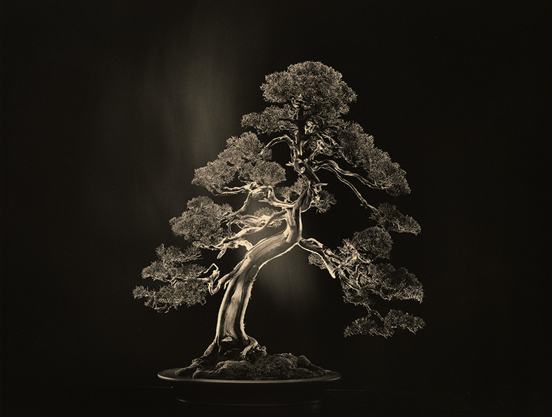 "<span class=""link fancybox-details-link""><a href=""/artists/38/series/bonsai/33426-yamamoto-masao-4000-1987-2018/"">View Detail Page</a></span><div class=""artist""><strong>Yamamoto Masao</strong></div> b. 1957 <div class=""title""><em># 4000</em>, 1987-2018</div> <div class=""signed_and_dated"">From the series ""Bonsai""<br /> Signed, dated, and editioned, in pencil, with title and artist stamp, in ink, au verso<br /> Printed in 2018</div> <div class=""medium"">Gelatin silver print</div> <div class=""dimensions"">10 x 13 ¼ inch (25.40 x 33.66 cm)</div> <div class=""edition_details"">Edition of 10 (#3/10)</div><div class=""copyright_line""> </div>"