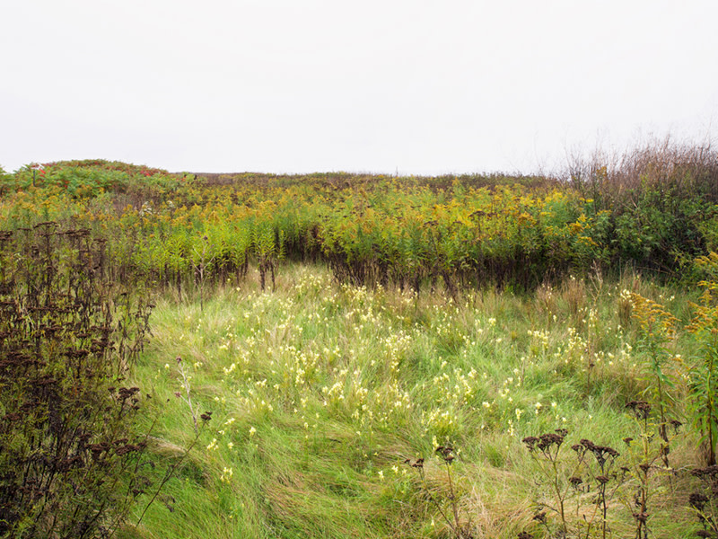 """<span class=""""link fancybox-details-link""""><a href=""""/artists/41-robert-burley/works/36113-robert-burley-wildflowers-in-the-flats-tommy-thompson-park-toronto-2014/"""">View Detail Page</a></span><div class=""""artist""""><strong>Robert Burley</strong></div> b. 1957 <div class=""""title""""><em>Wildflowers in the Flats, Tommy Thompson Park, Toronto</em>, 2014</div> <div class=""""signed_and_dated"""">From the series """"Accidental Wilderness""""<br /> Signed, titled, dated, and editioned,  au mount verso</div> <div class=""""medium"""">Pigment print on archival paper flush mounted to Aluminum Composite Panel</div> <div class=""""dimensions"""">30 x 40 inch (76.20 x 101.60 cm) image<br /> 40 x 48 inch (101.60 x 121.92 cm) print/mount</div> <div class=""""edition_details"""">Edition of 5</div>"""