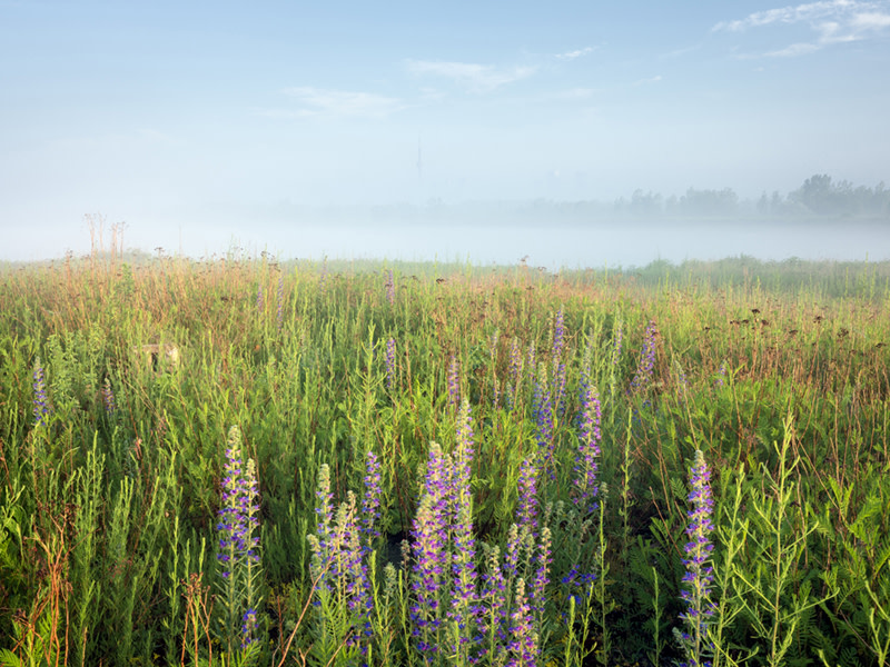 """<span class=""""link fancybox-details-link""""><a href=""""/artists/41-robert-burley/works/36116-robert-burley-wildflowers-and-grasses-on-the-tip-of-the-2019/"""">View Detail Page</a></span><div class=""""artist""""><strong>Robert Burley</strong></div> b. 1957 <div class=""""title""""><em>Wildflowers and grasses on the tip of the Endikement, Tommy Thompson Park, Toronto</em>, 2019</div> <div class=""""signed_and_dated"""">From the series """"Accidental Wilderness""""<br /> Signed, titled, dated, and editioned,  au mount verso</div> <div class=""""medium"""">Pigment print on archival paper flush mounted to Aluminum Composite Panel</div> <div class=""""dimensions"""">30 x 40 inch (76.20 x 101.60 cm) image<br /> 40 x 48 inch (101.60 x 121.92 cm) print/mount</div> <div class=""""edition_details"""">Edition of 5</div>"""