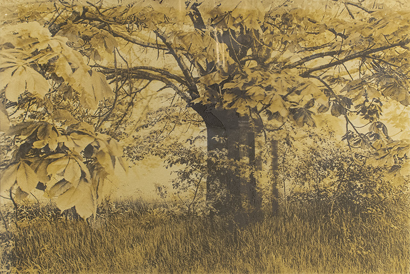 "<span class=""link fancybox-details-link""><a href=""/artists/54-phil-bergerson/works/35391-phil-bergerson-untitled-chestnut-tree-toronto-ontario-1971/"">View Detail Page</a></span><div class=""artist""><strong>Phil Bergerson</strong></div> b. 1947 <div class=""title""><em>Untitled (Chestnut tree), Toronto, Ontario</em>, 1971</div> <div class=""signed_and_dated"">Signed, dated, and annotated, in ink, au recto<br /> Artist ref #EPW-026<br /> Printed in 1971</div> <div class=""medium"">Two layers Solarized Kodalith over metal plate</div> <div class=""dimensions"">8 ½ x 12 ½ inch (21.59 x 31.75 cm) image<br /> 10 ¾ x 14 inch (27.31 x 35.56 cm) print<br /> 14 ¼ x 15 ¼ inch (36.20 x 38.74 cm) plate</div> <div class=""edition_details""></div><div class=""copyright_line"">Copyright [artist]</div>"