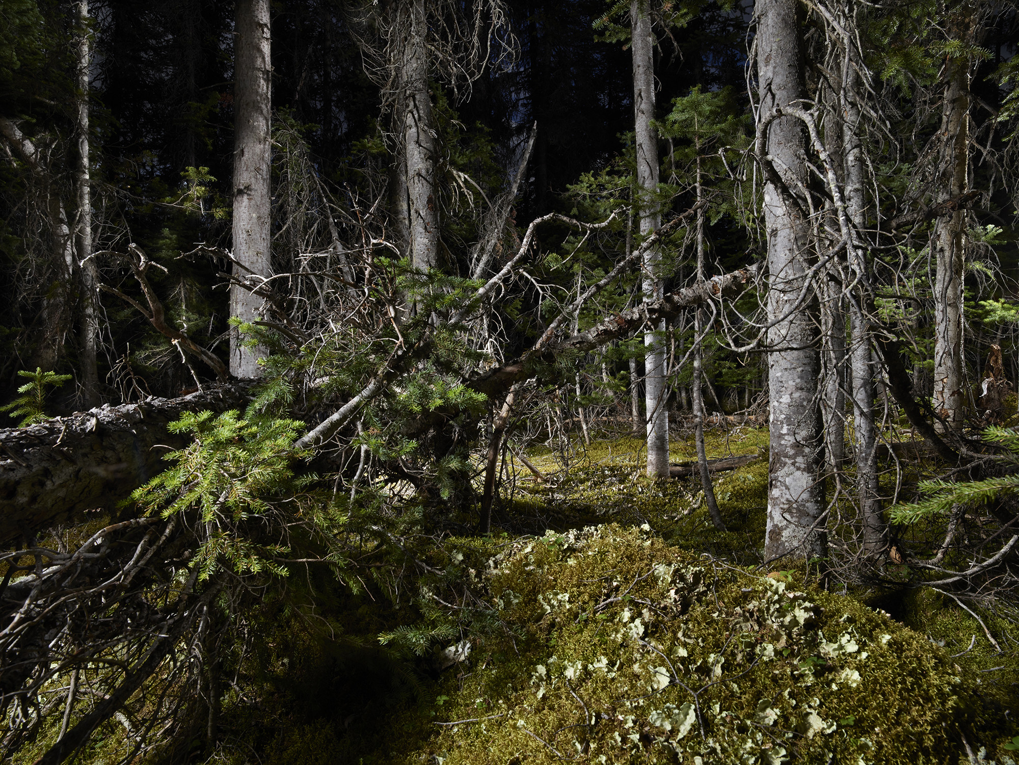 """<span class=""""link fancybox-details-link""""><a href=""""/artists/45-rita-leistner/works/35129-rita-leistner-the-tree-plantersenchanted-forest-06-2018/"""">View Detail Page</a></span><div class=""""artist""""><strong>Rita Leistner</strong></div> b. 1964 <div class=""""title""""><em>The Tree Planters–Enchanted Forest #06</em>, 2018</div> <div class=""""signed_and_dated"""">Signed, titled, dated, and editioned, au mount verso</div> <div class=""""medium"""">Pigment print on Hahnemühle Photo Silk Baryta Paper flush mounted to Aluminum Composite Panel</div> <div class=""""edition_details"""">Edition of 7 + 2 APs + 1 PP</div>"""