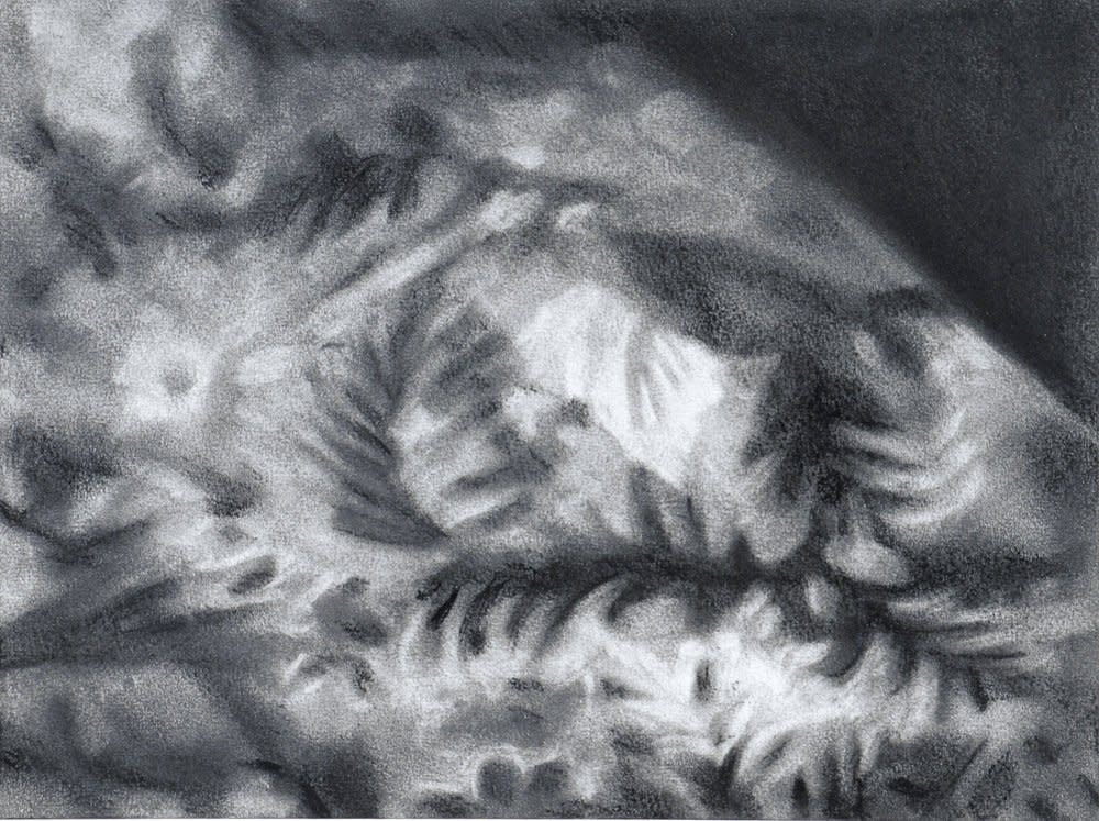 <span class=&#34;link fancybox-details-link&#34;><a href=&#34;/artists/14-rachel-lancaster/works/1618/&#34;>View Detail Page</a></span><div class=&#34;artist&#34;><strong>Rachel Lancaster</strong></div> <div class=&#34;title&#34;><em>Carpet</em>, 2007</div> <div class=&#34;medium&#34;>Graphite on Paper</div> <div class=&#34;dimensions&#34;>24 x 32 cms<br />9.46 x 12.61 inches</div><div class=&#34;copyright_line&#34;>Copyright The Artist</div>