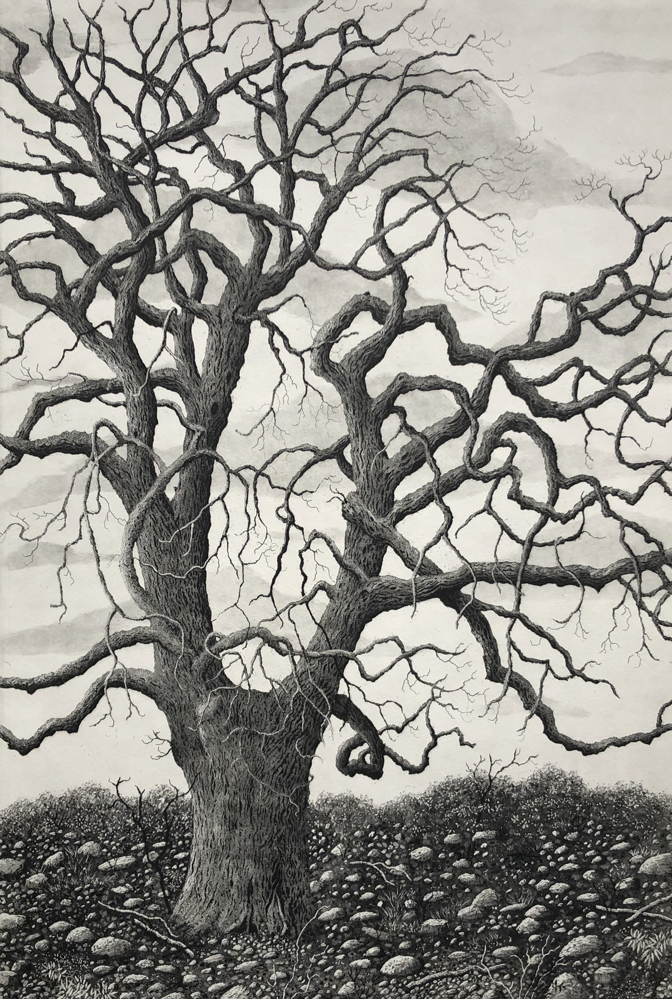 "<span class=""link fancybox-details-link""><a href=""/exhibitions/17/works/image_standalone784/"">View Detail Page</a></span><p><strong>Stephanie Jane Rampton</strong></p><p>Tree of Grace</p><p>etching and aquatint, ed of 10</p><p>76 x 58cm</p><p>£544 framed</p><p>£408 unframed</p>"