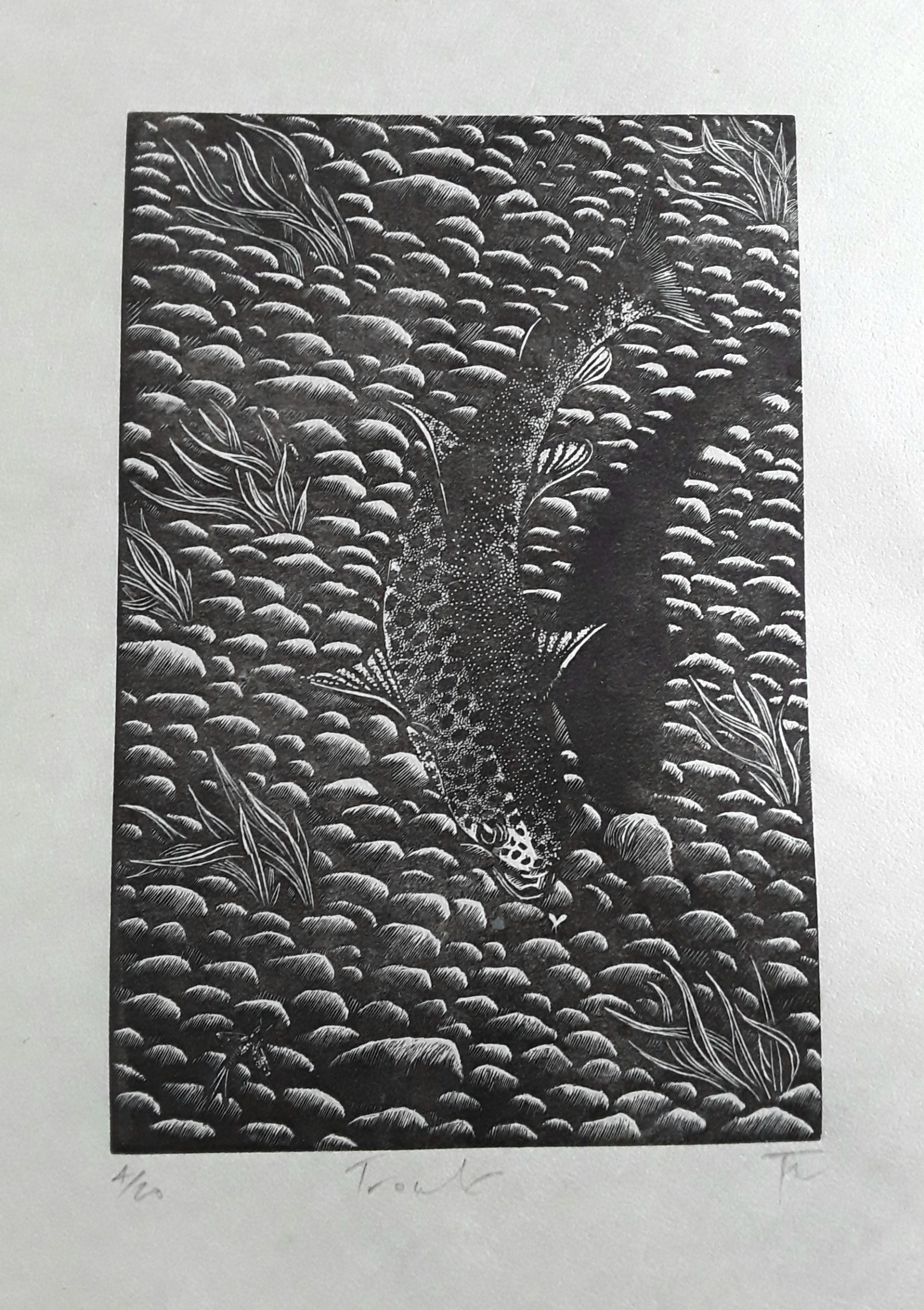 "<span class=""link fancybox-details-link""><a href=""/exhibitions/18/works/image_standalone1049/"">View Detail Page</a></span><p>Nikki Tait</p><p>Trout</p><p>wood engraving</p><p>27 x 33cm</p><p>£110 framed</p><p>£90 unframed</p>"