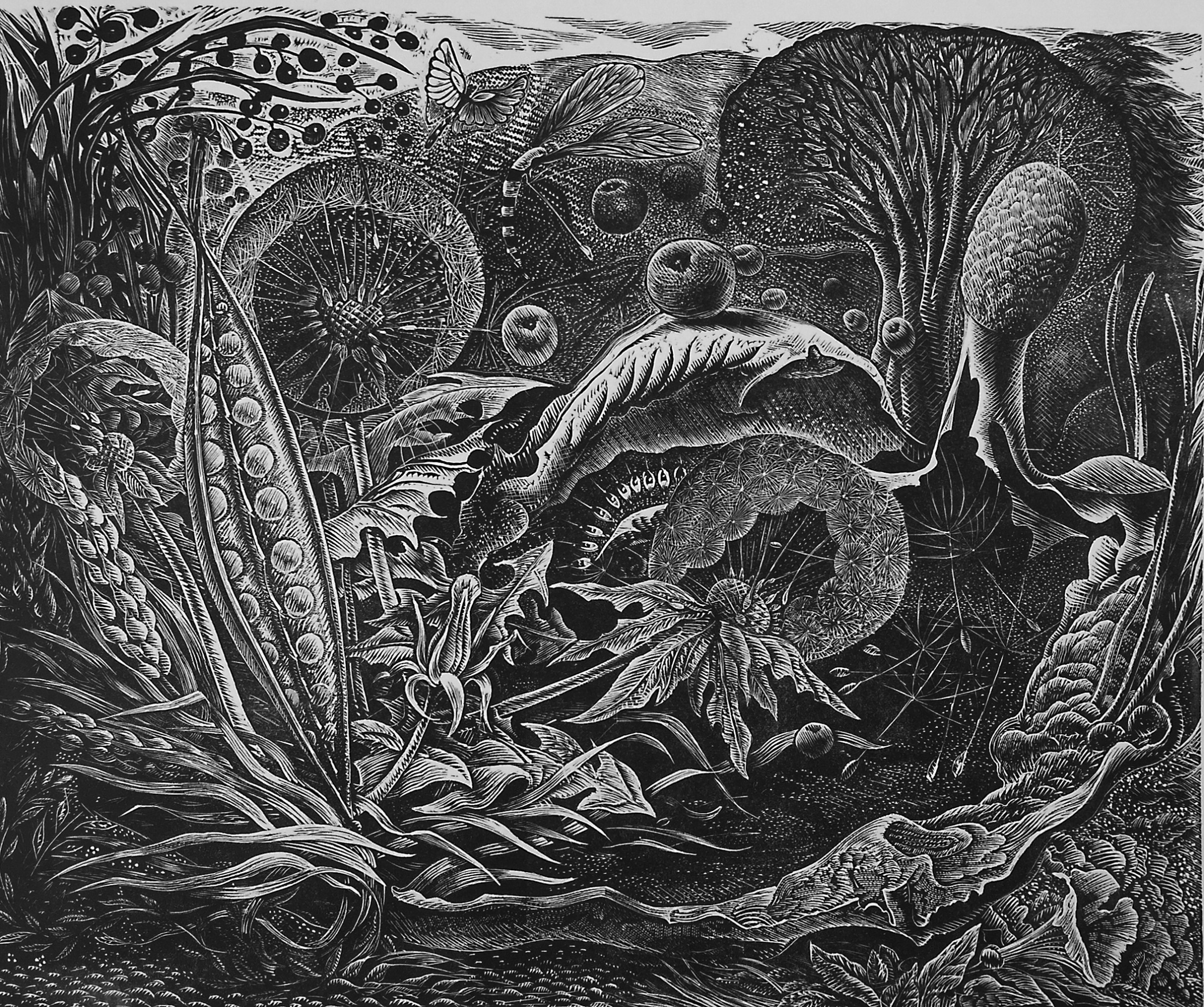 "<span class=""link fancybox-details-link""><a href=""/exhibitions/18/works/image_standalone1060/"">View Detail Page</a></span><p>George Tute RE</p><p>Large Dandelion Field</p><p>wood engraving</p><p>44 x 50cm</p><p>£1100 framed</p><p>£950 unframed</p>"