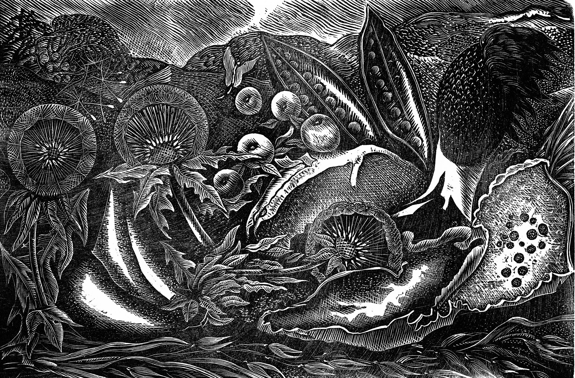 "<span class=""link fancybox-details-link""><a href=""/artists/136-george-tute-re/works/9460/"">View Detail Page</a></span><div class=""artist""><span class=""artist""><strong>George Tute RE</strong></span></div><div class=""title""><em>Nature Morte II</em></div><div class=""medium"">wood engraving</div>"