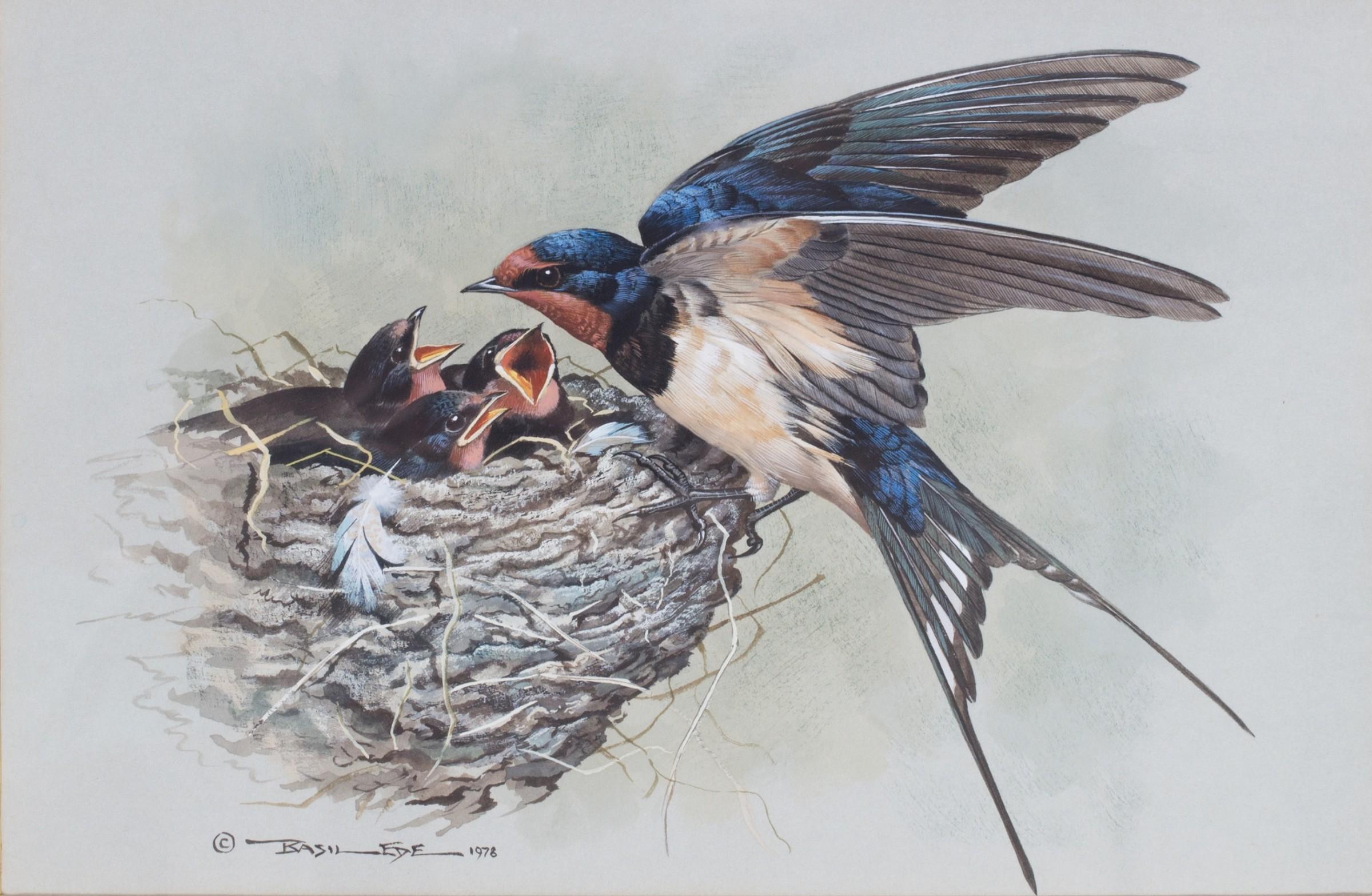 Basil Ede, Barn swallow at nest | Rountree Tryon