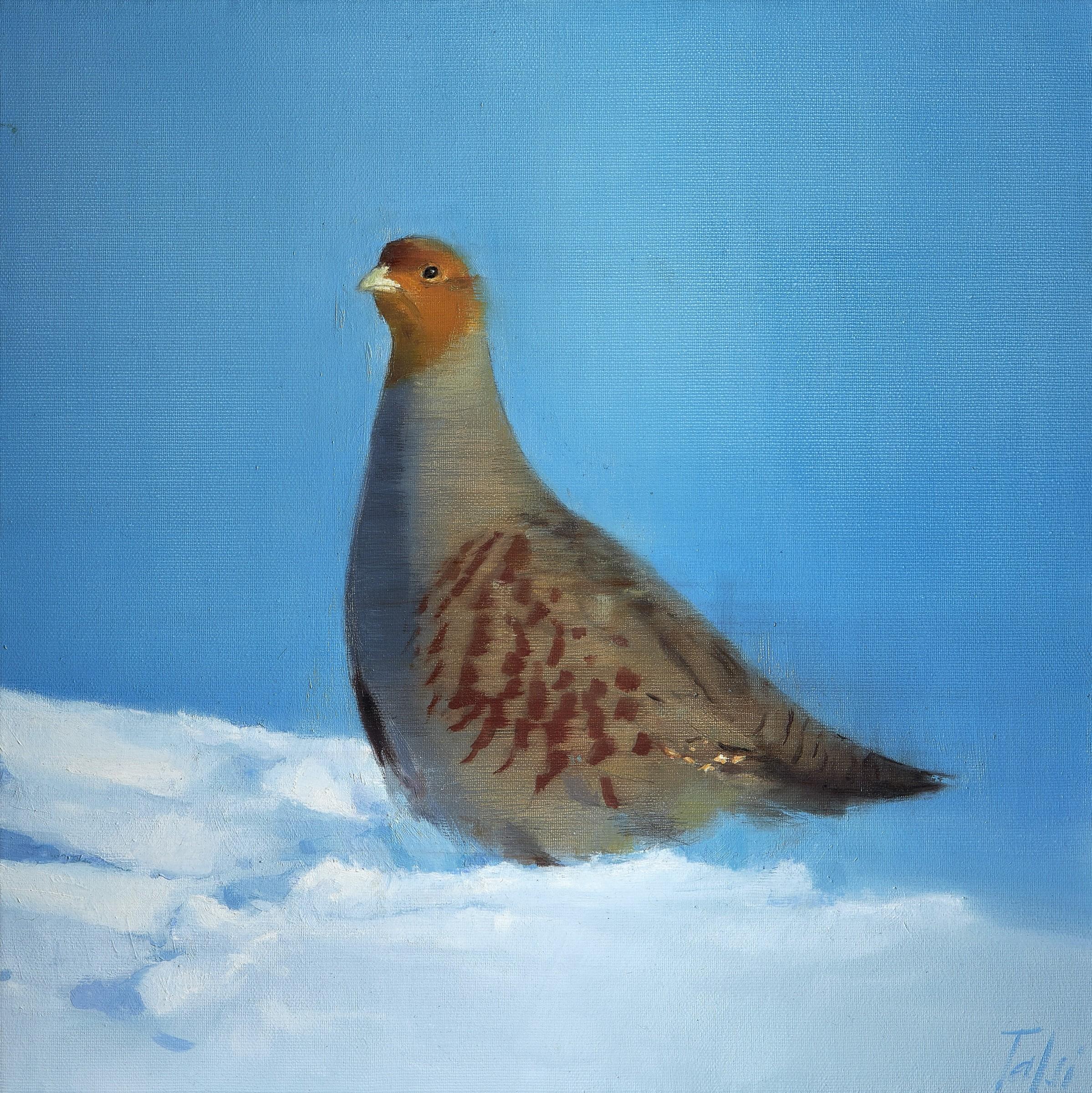 Annika Talsi Grey Partridge