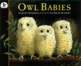 Image result for owl babies