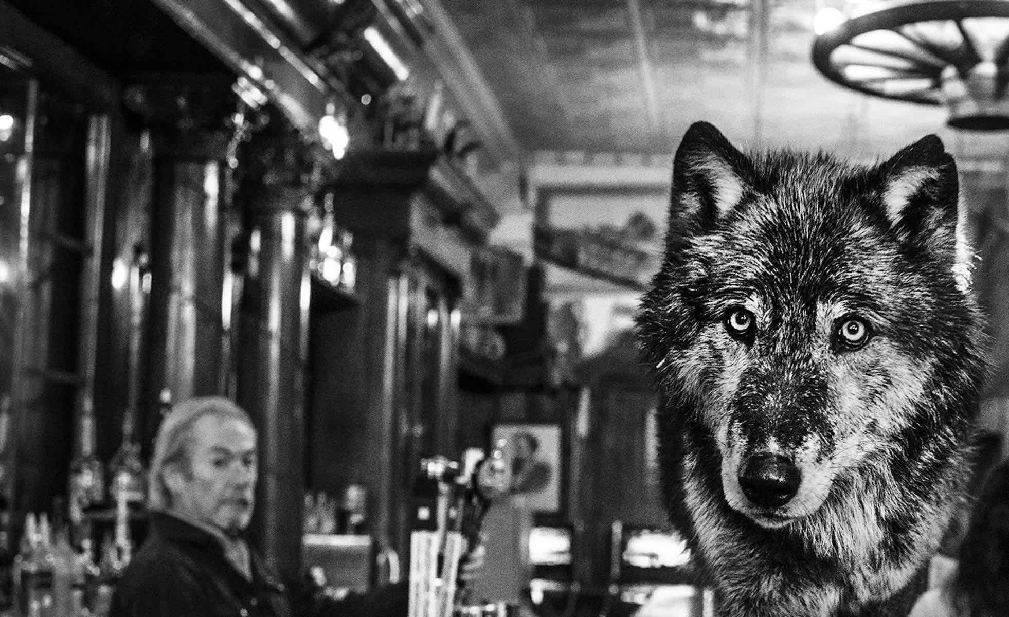 The Wolf Of Main Street