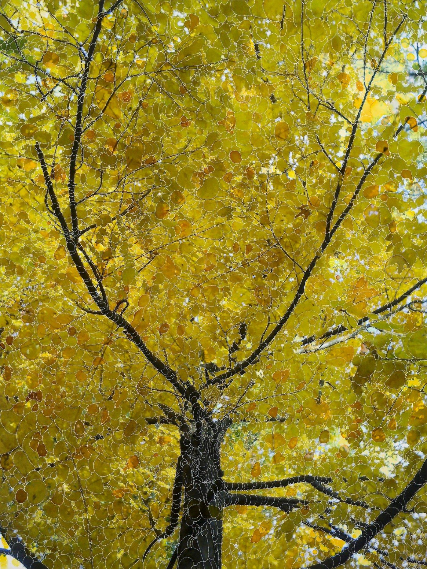 Lemon tree, 2013