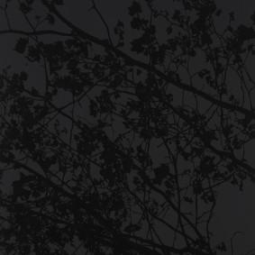 Soul shadows, 2013