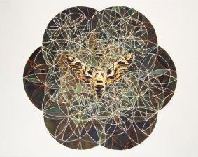 Mat Chivers, Metaphormosis (Oleander Hawk Moth), 2013
