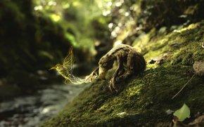 The Golden Hummingbird