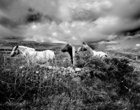 Ponies of Inishowen