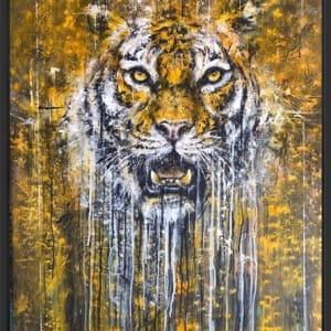 Daniel Hooper, Tiger., 2020