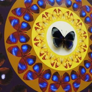 Iain Cadby, Target Mandala (Dark Violet Blue) , 2020