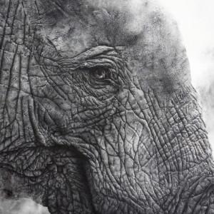 David Filer, Lifesize Juvenile Elephant, 'Moyo'