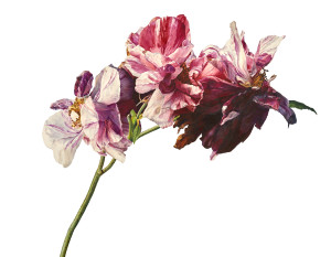 Rosie Sanders Gloria mundi Watercolour on Arches 640gsm paper 54.25 x 70ins (138 x 178cm) (artwork size) 55.9 x 71.65 (142 x 182 x 6.5cm) (framed size)